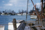 Key West, fleet of shrimp boats in harbor