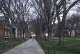 Newark, tree-lined sidewalk on University of Delaware campus