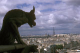 Paris, gargoyle looking down from Notre Dame