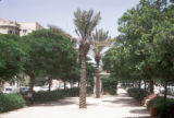 Tel Aviv, view of Rothschild Boulevard