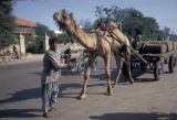Karachi, camel-drawn cart