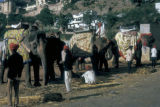 Jaipur, transportation by elephant