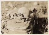 Human skull perched on slabs of stone in Svanetia