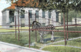 New animal house and zebra cage, Washington Park Zoo, Milwaukee, Wis.