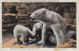 Polar bear and cubs, Washington Park Zoological Garden, Milwaukee, Wis.
