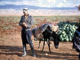 Pack-donkey in Palestine