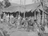 Pack-donkeys in Honduras
