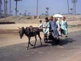 Donkey-pulled cart in Egypt