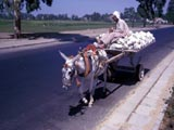 Donkey-pulled cart in Cairo, Egypt