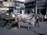 Ox-pulled cart in Delhi, India