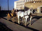 Horse-drawn carriage in Hungary