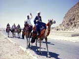 Camel caravan in Egypt